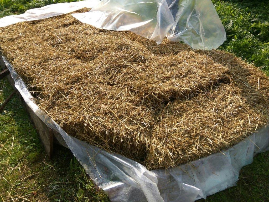 Приготовление субстрата для выращивания шампиньонов